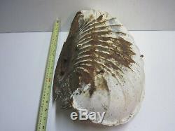 Antique Cast Iron Scallop Shell Trough Feeder Painted White Barn Garden Birdbath
