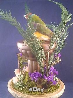 SALEBEAUTIFUL TAXIDERMY GOULDIAN FINCH, With BIRD BATH/GLASS DOME DISPLAY//GARDEN